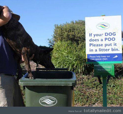 If your dog does a poo