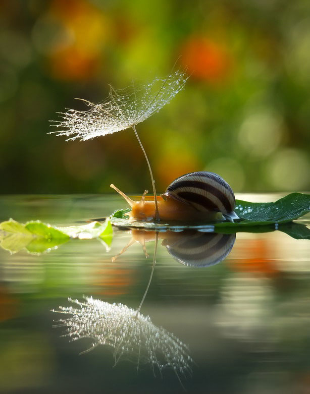 unseen world and beauty of snails by Vyacheslav Mischenko (4)