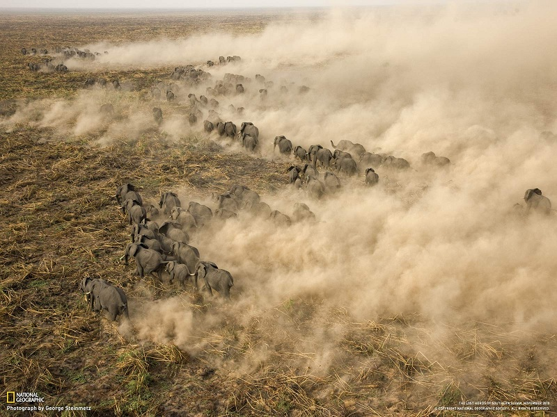 Photo of the Day: Giant Elephant Herd in Sudan