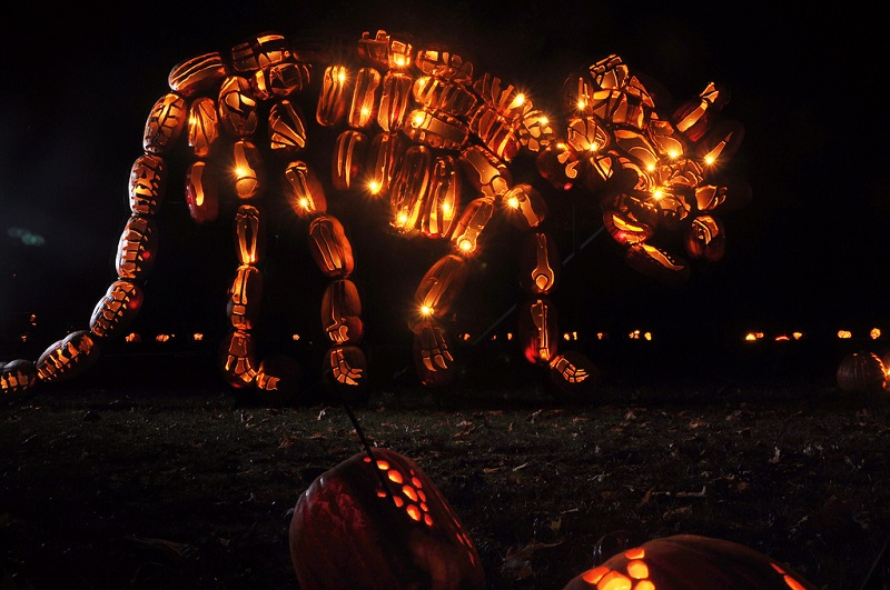 Photo of the Day: Jack O'Lantern Triceratops