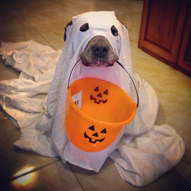 17 Adorable Dogs Dressed As Ghosts