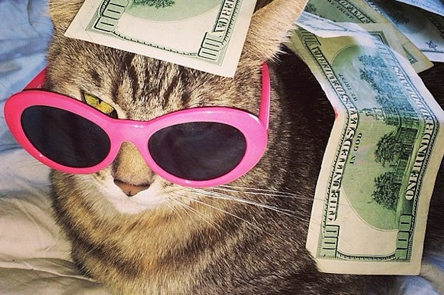 19 Cats Who Clearly Kept Up With The Kardashians