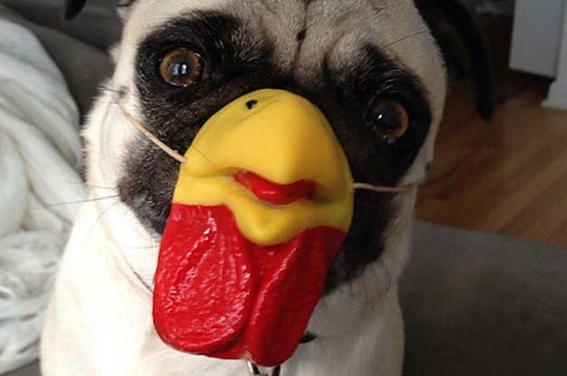 21 Reasons You're About To Fall In Love With Luchino The Pug