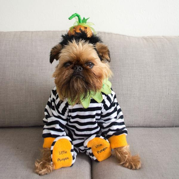 33 Pets Who Are Totally Winning Halloween
