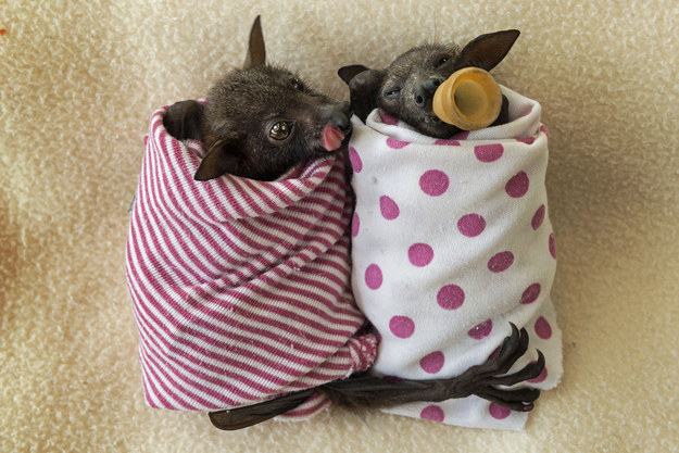 Unbelievably Cute Pictures Of Baby Bats