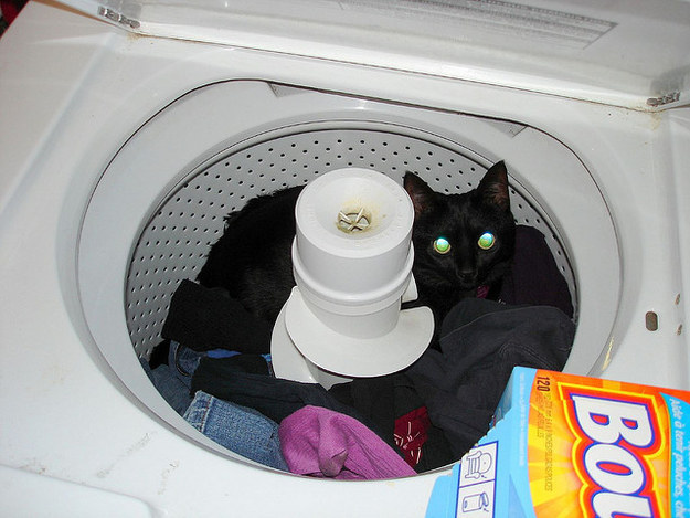 Man Seeks Help Removing Ghost Cat From Washing Machine