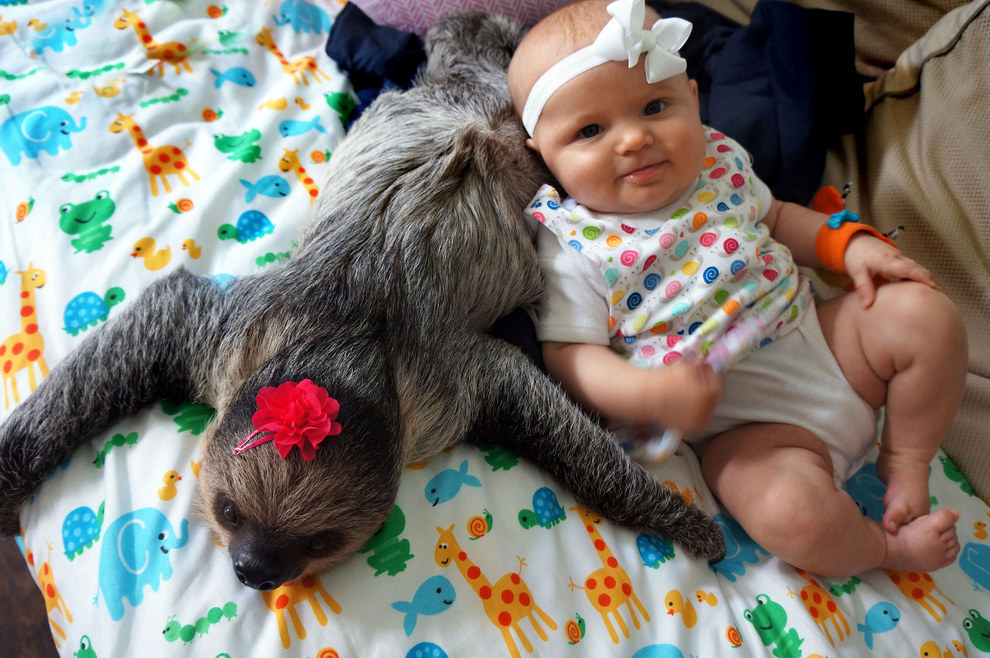 This 5-Month-Old Baby And A Sloth Have Been Best Friends Since Birth