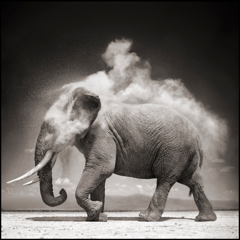 Photo of the Day: Elephant Dust Bath