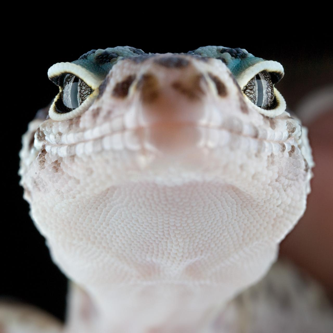 Photo of the Day: Macro Gecko