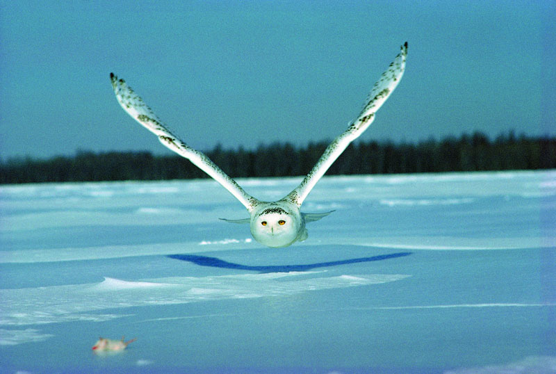 Photo of the Day: Owl Get You