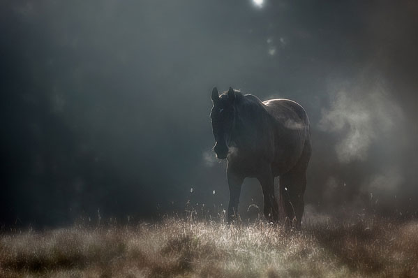 Portraits of Solitude by Mikko Lagerstedt