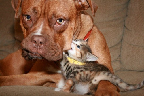 17 Dogs Meeting Kittens For The Very First Time