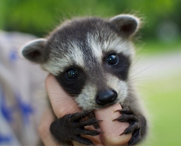 Ranking Of The Cutest Baby Animals