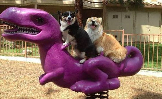These dogs riding a dinosaur.