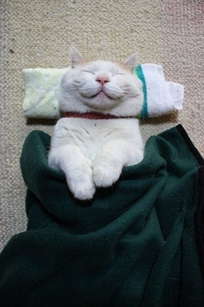 This cat in a blanket.