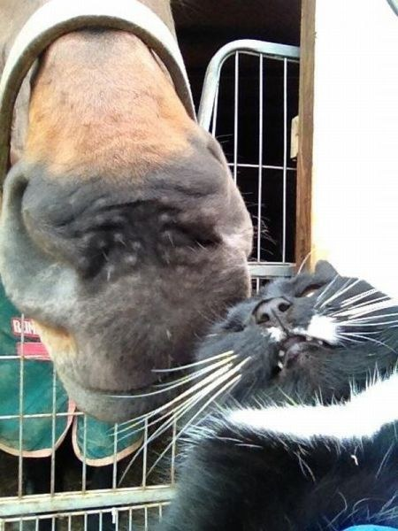 This cat's selfie with this horse.