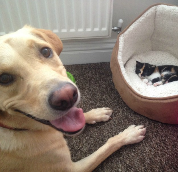 This dog who just birthed a kitten.