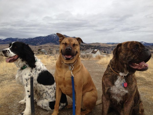 This dog who's so happy to be hanging out with his buddies.