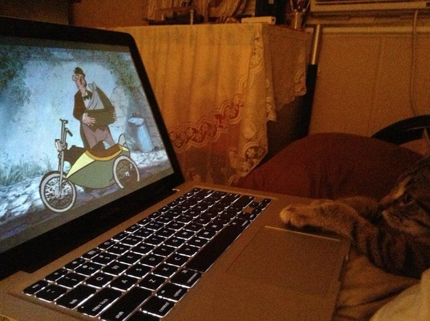 "This kitten watching the ""Aristocats"""