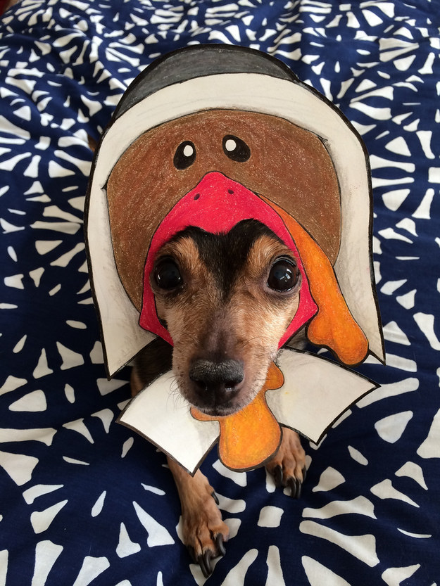 This lady turkey pilgrim.