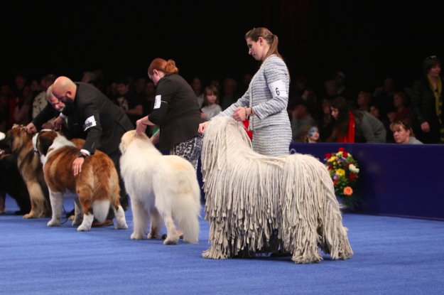 We can all agree that the National Dog Show is the best part of Thanksgiving, right?