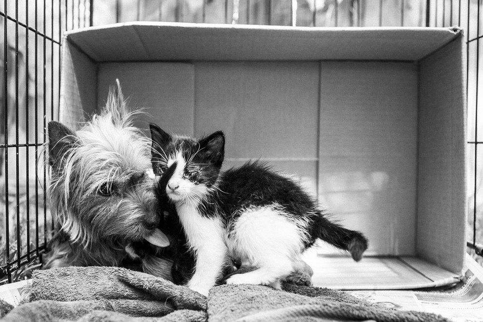 A Photographer Found An Abandoned Yorkshire Terrier Caring For Two Kittens As If They Were Her Puppies