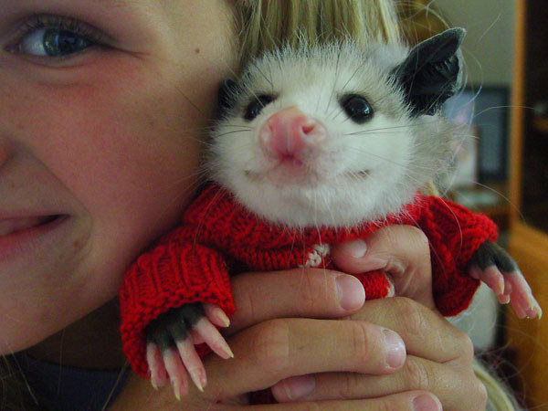 17 Times Opossums Were The Unsung Heroes Of Cute