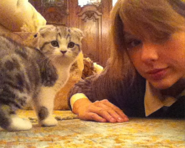 Which Taylor Swift Cat Are You