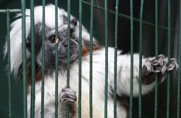 Endangered Monkeys Freeze To Death At Louisiana Zoo After Being Left Outside