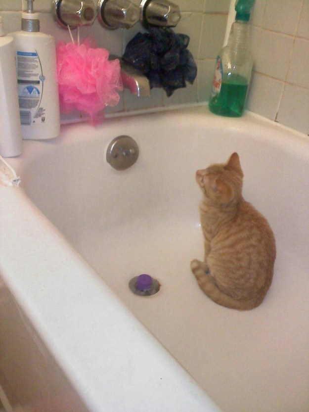 """If I stare at the magic shiny water maker for long enough it eventually goes on."""