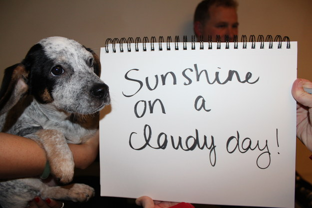 """Sunshine on a cloudy day!"""