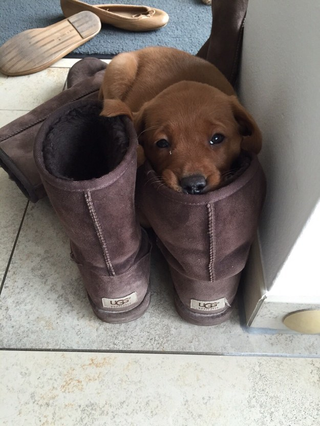 This lil' dude who can lay in your boot because...YEP, HE'S JUST THAT CUTE.