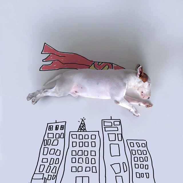 Rafael mantesso Takes Portraits of His Bull Terrier and Illustrates the Background (6)