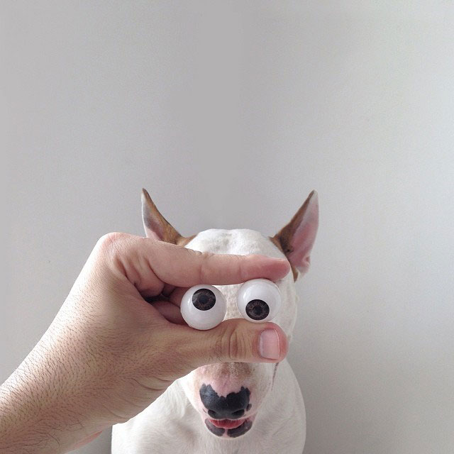 Rafael mantesso Takes Portraits of His Bull Terrier and Illustrates the Background (2)