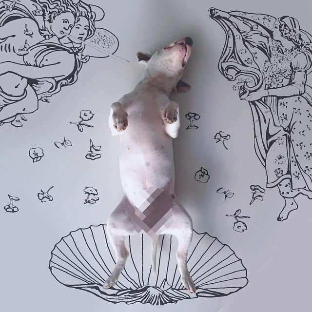 Rafael mantesso Takes Portraits of His Bull Terrier and Illustrates the Background (9)
