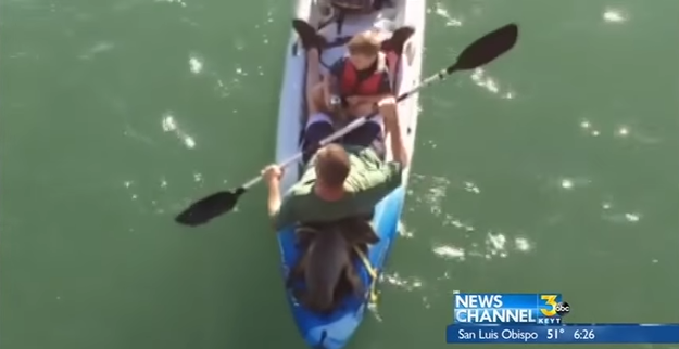 "Father Rodney Gist, who was at the back of the kayak, told KTLA 5 News: ""At first it felt like he was pushing the kayak. We felt him back there."""