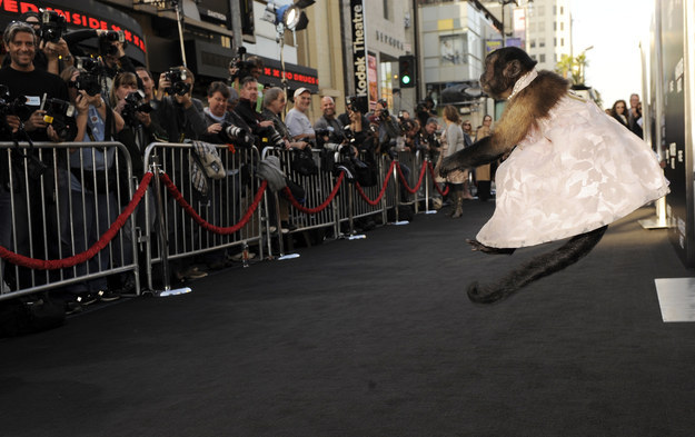 "Fellow host Pauley Perrette described Crystal as ""the Angelina Jolie of animal stars."""