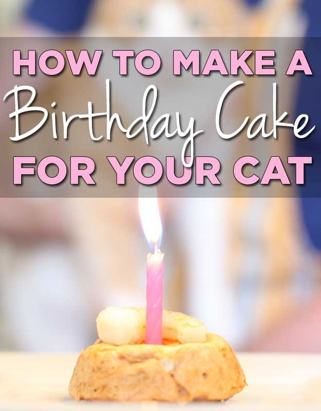 How To Make A Birthday Cake For Your Cat