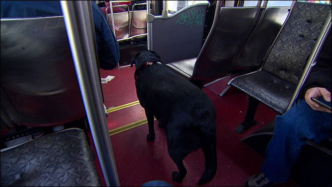 Independent Dog Rides the Bus by Herself to the Park seattle (4)