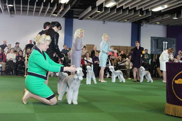 This Is What Happens When A Commoner Goes To The Fanciest Dog Event In The World
