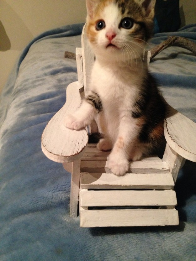 """""""A teeny tiny beach chair? Just for me?!"""""""