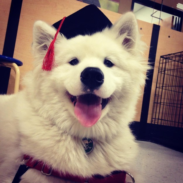 """Does my fluff look more refined now that I'm a graduate?"""