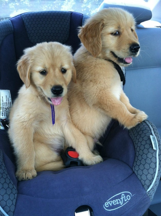 """""""Fact: Road trippin' is the most fun with your best buddy."""""""