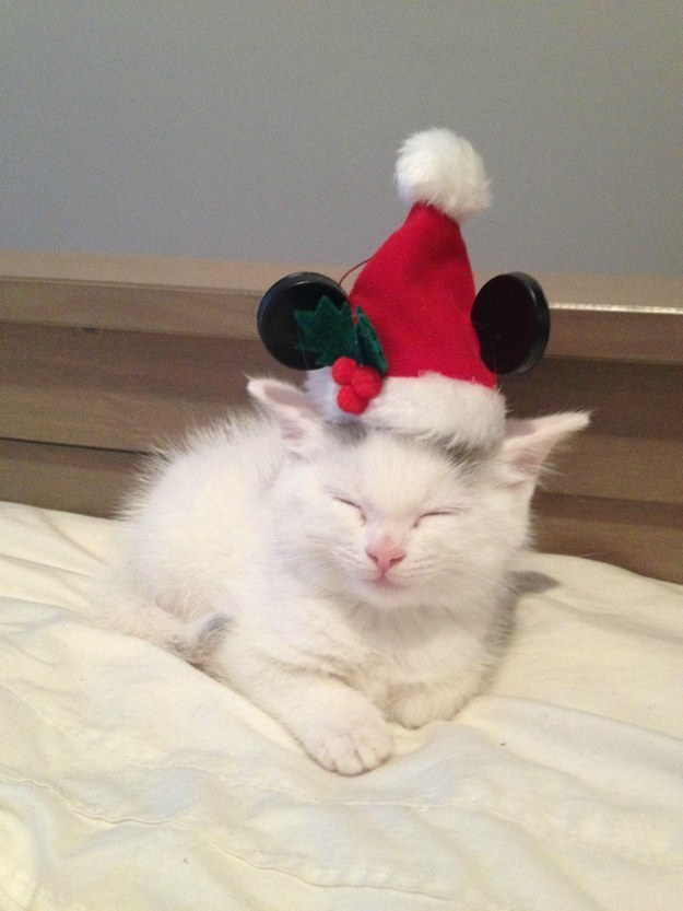 """""""I am a tiny kitten in a tiny hat. Nothing in life is happier than this."""""""