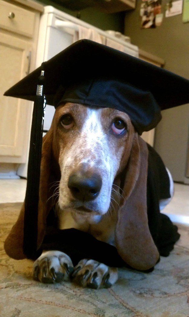 """I may have my diploma but I still can't figure out how to keep my ears out of the food dish during dinner time."""