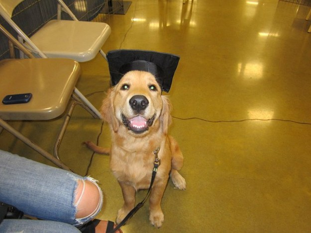 """I'M THE FIRST DOG IN MY FAMILY TO GET A DIPLOMA."""