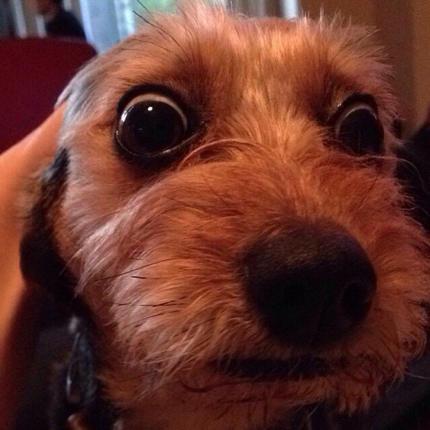 17 Dogs Still Having A Deep Existential Crisis Over The Dress