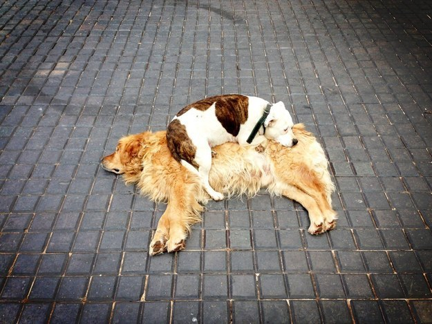 19 Adorable Dogs And Their Best Buddies