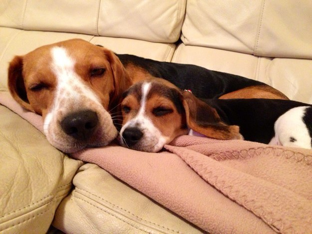 """""""Snuggle time is INFINITELY better with my pal around!"""""""