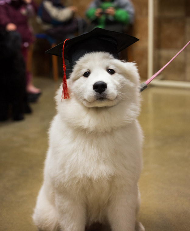 18 Puppies Who Just Earned Their Diploma